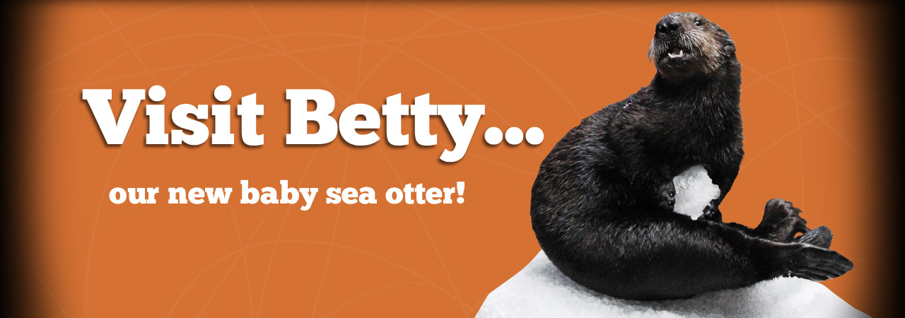 Betty Sea Otter