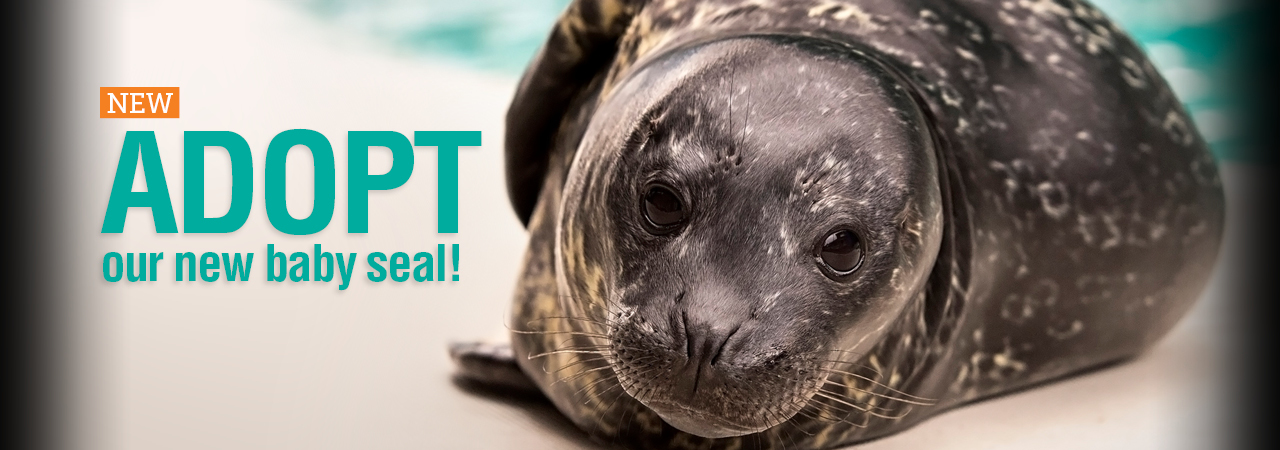adopt our seal pup
