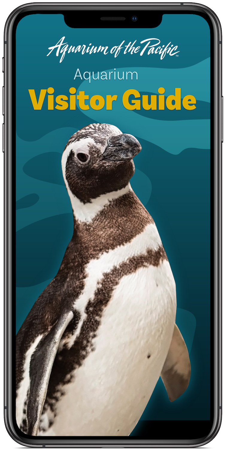 iPhone Aquarium Visitor Guide App