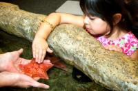 little girl touching a sea star