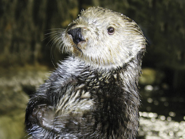 Junior Biologist: Marine Mammals