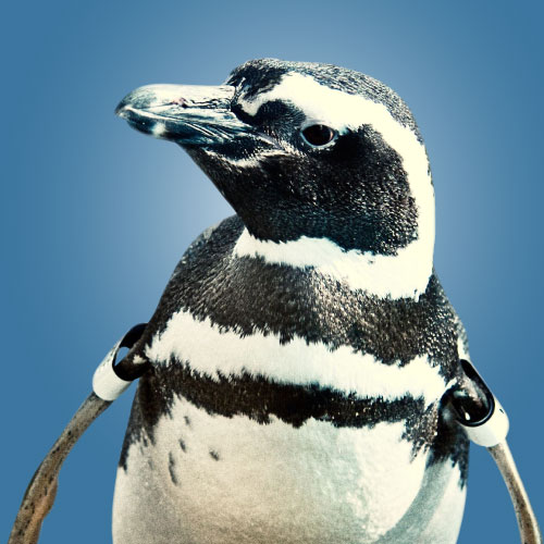 Whatever the Penguin
