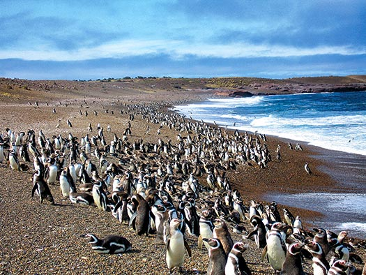 Penguin Beach D. Boersma