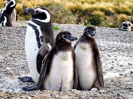 Penguins on the Beach D. Boersma